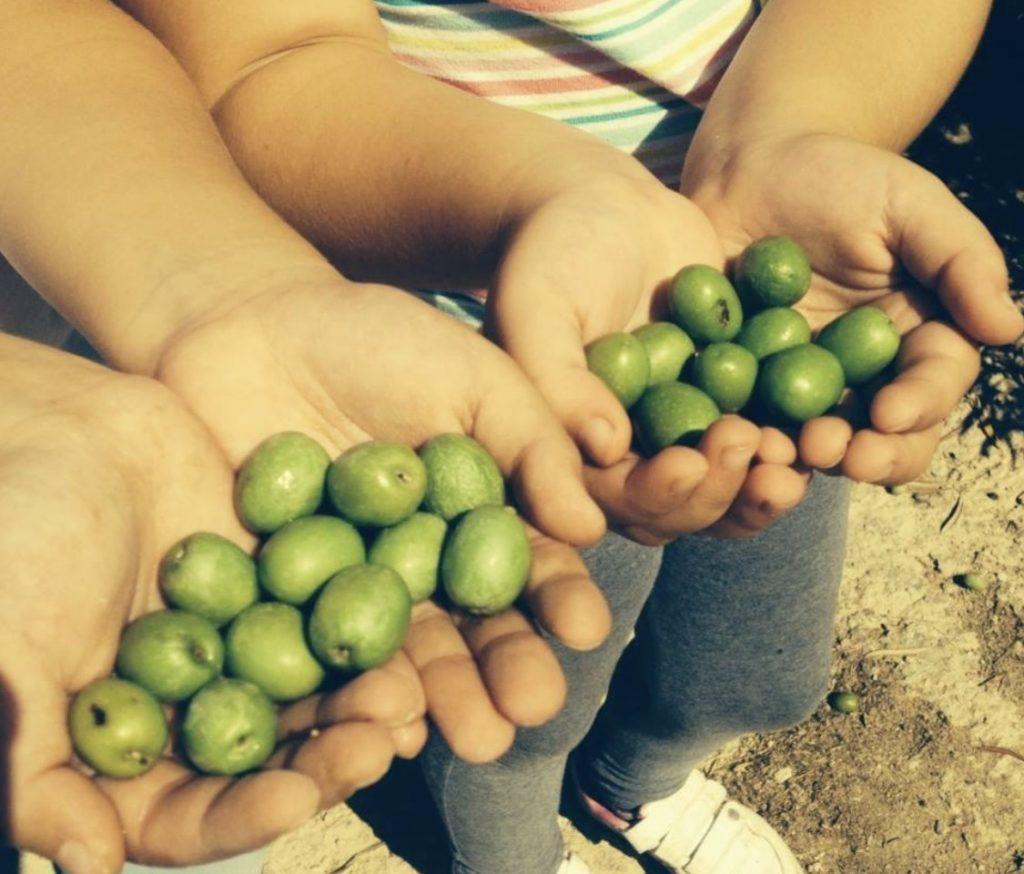 Bonne taille des olives