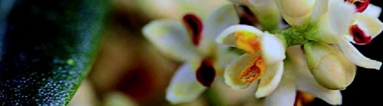 4 floracion