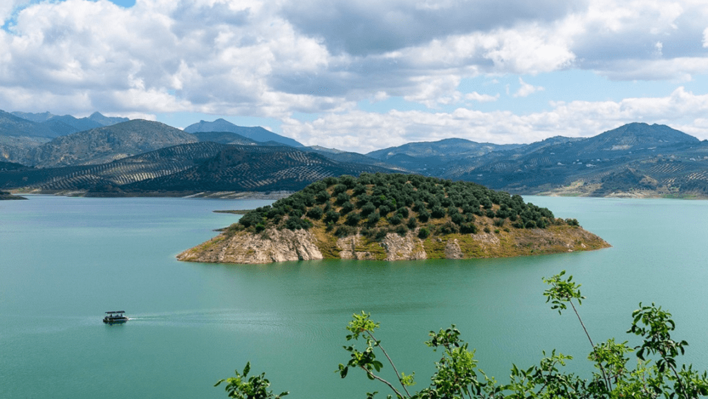 Isla de Olivos Huile d'olive extra vierge